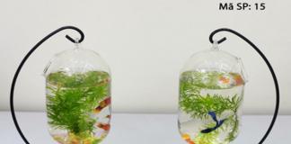 Vật phẩm bể cá mini