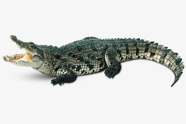 Mơ thấy bị cá sấu đuổi