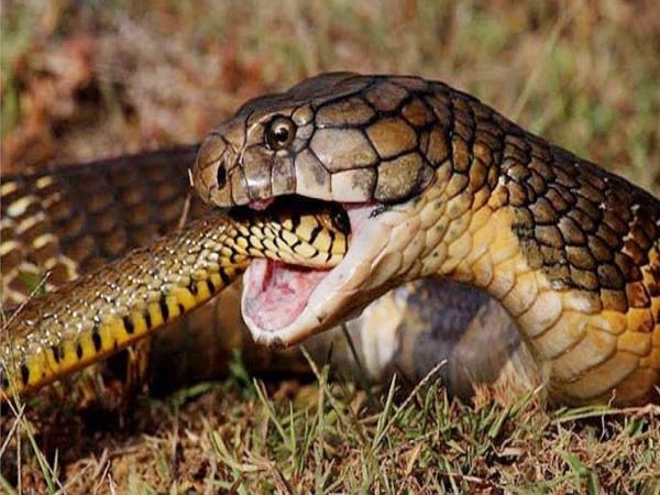 Mơ thấy 2 con rắn mang lại điềm báo tốt hay xấu