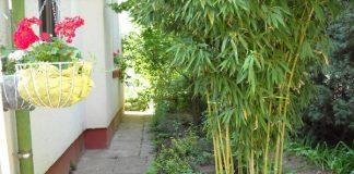 Nguyên tắc trồng cây