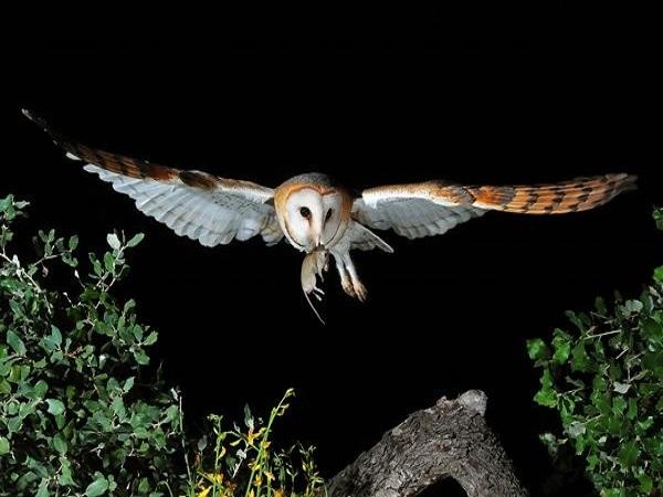 Dấu hiệu điềm báo chim chóc