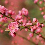 loài hoa