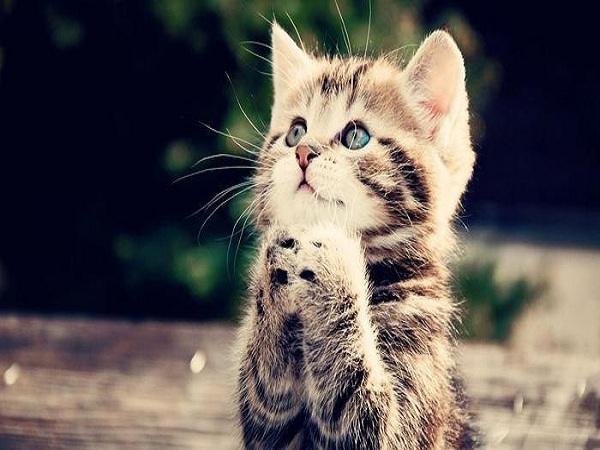 Mơ thấy mèo là điềm báo gì, ý nghĩa giấc mơ thấy mèo