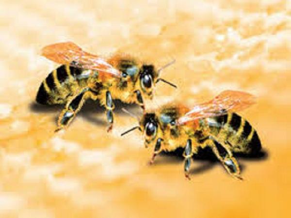 Bị ong đốt mang đến những việc may mắn dành cho bạn