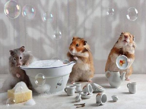 Nằm mơ thấy chuột là tốt hay xấu