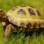 Giải mã ý nghĩa giấc mơ thấy rùa