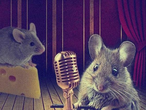 Chuột cắn đồ mang lại điềm báo gì?