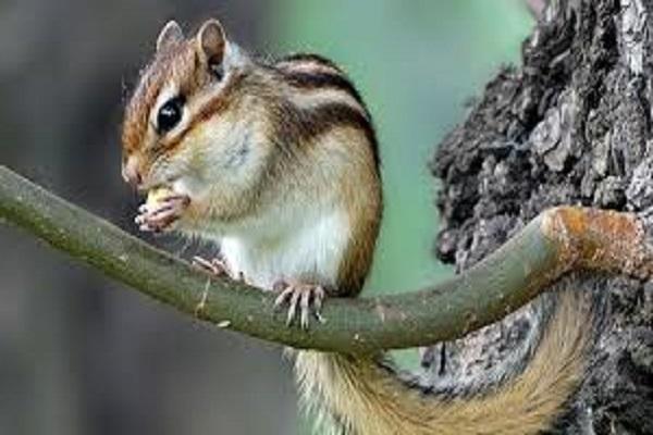 Chuột kêu mang đến điềm báo gì?