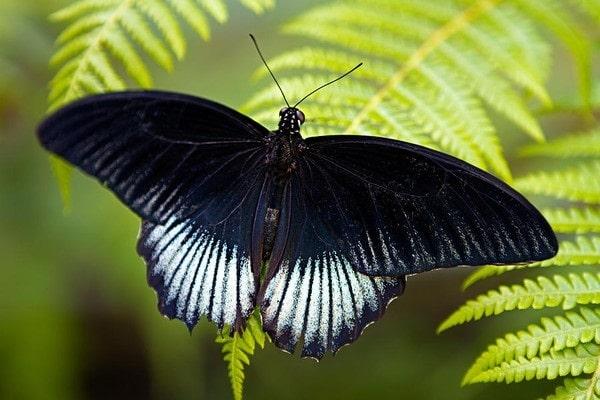 bướm đậu vào người