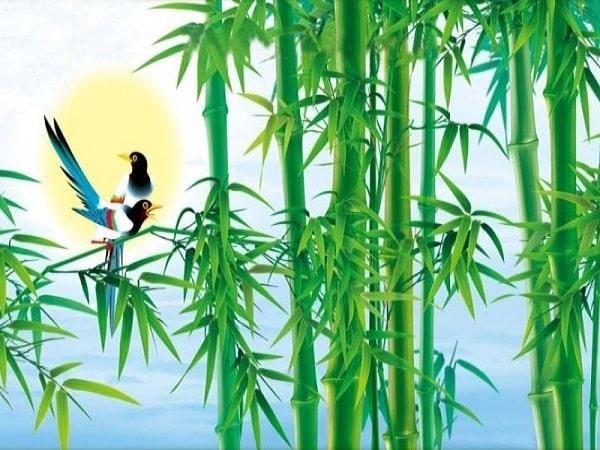 Vị trí đặt cây tre phong thủy may mắn