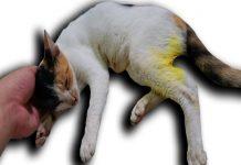 Mèo chết trong nhà mang đến điềm báo gì?