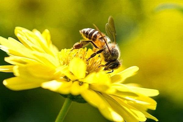 Điềm báo ong bay vào nhà
